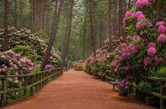 Haaga Rhododendron Park Helsinki  |    Tina...