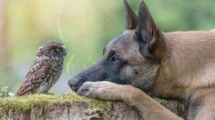 A amizade contagiante de Poldi e Ingo, uma coruja e um cão