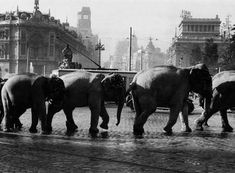 Elefantes en la Cibeles. (Madrid, principios S.XX)