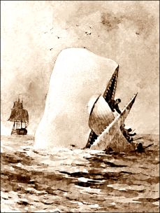 Moby_Dick_2