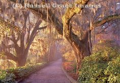 Maclay Gardens at sunrise, Tallahassee FL...Nice place for Sunrise Services on Easter