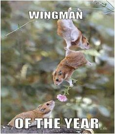 Romance from above. >> 20 Funny Animal Pictures With Captions