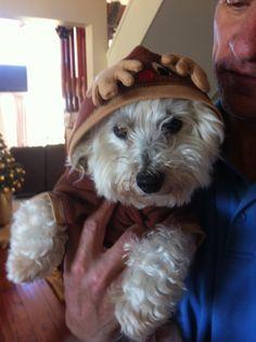 Chances reindeer costume 2013