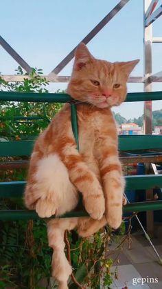 CAT Orange Things z orange do nju Cute Funny Animals, Funny Animal Pictures, Cute Baby Animals, Animals And Pets, Funny Cats, I Love Cats, Crazy Cats, Cool Cats, Kittens Cutest