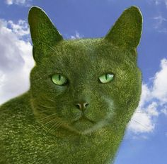 Image result for richard saunders topiary cats location