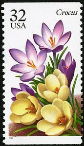 32c Crocus single