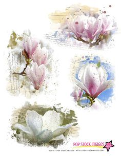 MAGNOLIA Digital Overlays - Blendable - Page Element Blenders - Digital Stamp - Digital Page Overlay - Texture Overlay for Papers