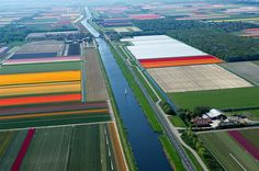 Aerial Photographs of Tulip Fields in the Netherlands by Normann ...