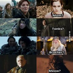 "Game of Thrones / harry Potter funny memes Lol ""meow? Harry Potter Jokes, Harry Potter Fandom, Got Memes, Funny Memes, Gsme Of Thrones, Acteurs Game Of Throne, Game Of Throne Lustig, Game Of Thrones Funny, Khal Drogo"