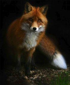 Image about nature in Cute Birds & Animals by Shorena Ratiani Pretty Animals, Most Beautiful Animals, Cute Funny Animals, Cute Baby Animals, Animals And Pets, Nature Animals, Wild Animals, Fox Pictures, Cute Animal Pictures