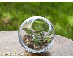 Small Terrarium Bubble Bowl