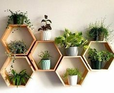 Set of 6 Medium Deep Hexagon Shelves, Honeycomb Shelves.- Set of 6 Medium Deep Hexagon Shelves, Honeycomb Shelves, Floating Shelves, Geometric Shelves - Geometric Shelves, Honeycomb Shelves, Hexagon Shelves, Geometric Decor, House Plants Decor, Plant Decor, Plants In Living Room, Bedroom Plants Decor, Plants In Kitchen