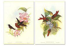 John Gould, Hummingbirds II, Set of Two---I love hummingbirds