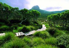 Tasmanien - Cradle Mountain Lake St. Clair National Park