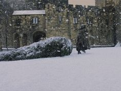Hagrid dragging a Christmas tree through Alnwick Castle's Inner Bailey Harry Y Hermione, Draco, Hogwarts Christmas, Magical Christmas, Merry Christmas, Christmas Images, White Christmas, Christmas Trees, Cho Chang