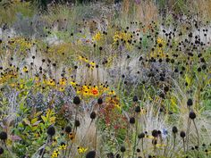 Volker Michael | Focus on garden - Fine Photography (like this, lots of grass between the flowers)