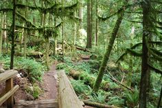 PoCo Trails are just one thing that Port Coquitlam has to offer in Tri Cities, British Columbia, Trail, Hiking, Real Estate, Outdoors, Community, Adventure, Fitness