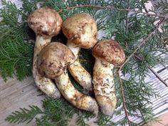 there will be matsutake mushroom. $1,000 a pound