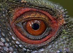 Výsledek obrázku pro beautiful eye deformities