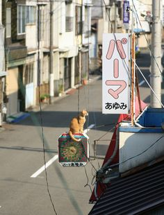A kitty sitting on beauty parlor's sign, Japan. It's amazing how cats manage to get themselves on teeny weeny spaces. Aesthetic Japan, Japanese Aesthetic, City Aesthetic, Crazy Cat Lady, Crazy Cats, Animals And Pets, Cute Animals, Photographie Portrait Inspiration, Japan Street