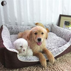 Excellent Quality Large Breed Dog Bed Sofa house !    $ 45.90 and Spend $100 - Free Shipping !     Tag a friend who would love this!     Active link in BIO     #puppylove #puppy #puppygram #puppyoftheday #puppylife #puppydog #puppypalace #puppyeyes #puppys #puppyface #puppies #puppiesofinstagram #puppiesforall #puppiesofig #puppie #puppiesxdogs #puppiesforsale #frenchbulldog #frenchie #dog #dogsofinstagram #dogs #dogstagram #dogoftheday #doggy #doglife #doglove #dogofinstagram…