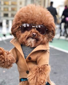 Baby Animals Super Cute, Cute Baby Dogs, Cute Funny Dogs, Cute Little Animals, Cute Funny Animals, Baby Animals Pictures, Cute Animal Photos, Cute Animal Pictures, Cutest Dog On Earth