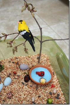 bird theme sensory bin - for our trips to birdsong or nature / spring unit
