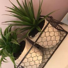 Plantes | @giftryapp