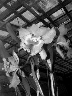 Flowers (01)