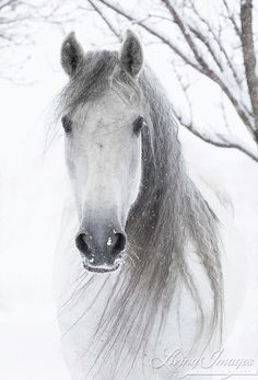 Snowy Mare Comes Close Fine Art Horse Photograph by WildHoofbeats