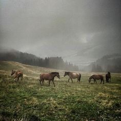 Lost in horse nation by jr