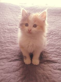 Lovely kitty baby cat