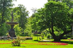We love taking our Vista on Morning walks in the Halifax public Gardens!