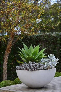 Outdoor Potted Plant Entryway Ideas