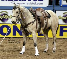 I love Tuf Cooper horse Jag. He is a perfect example of a Quarter Horse. He gives his all every time he enters that arena.