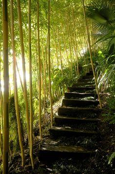 planter des bambous, escalier miraculeux avec bambous autours                                                                                                                                                                                 Plus Bamboo Screening Plants, Zen Office, Comment Planter, Bamboo Canes, Outdoor Stairs, Garden Pool, Pathways, Garden Inspiration, Shrubs