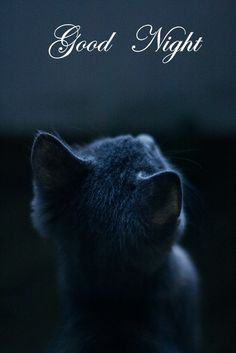 Kitty in moonlight :: precious russian blue? Crazy Cat Lady, Crazy Cats, Photo Chat, Blue Cats, Beautiful Cats, Beautiful Creatures, Good Night, Night Time, Cats And Kittens