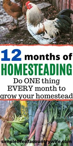 When you start your homesteading journey it can be overwhelming and confusing. Check out this 12 month plan to grow your homestead with practical, easy homesteading tips! Homestead Farm, Homestead Gardens, Homestead Living, Farms Living, Homestead Survival, Survival Skills, Survival Prepping, Homestead Layout, Survival Food