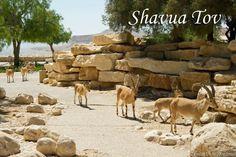Shavua Tov! Shavua Tov, Jewish Recipes, Hanukkah, Comme, Motivational Quotes, Holidays, Signs, Food, Shabbat Shalom