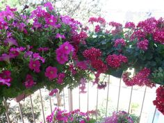 balcon fleuri par maryline biegnon sur L'Internaute