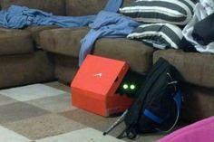 #интересное  Коты прячутся (39 фото)   Забавные фотографии спрятавшихся котов.       далее по ссылке http://playserver.net/?p=145004
