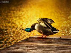 Morning yoga II by Zsolt Zsigmond on 500px