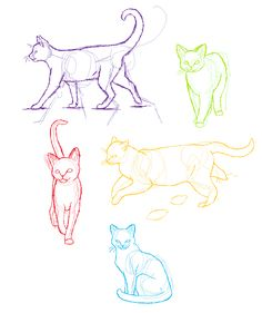 Anatomy practice- Cats by candracar272.deviantart.com on @deviantART