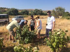 Our visit to Mr Manolis Garalis' vineyard on Sunday, July 24 at Limnos Island, Greece. July 24, Vineyard, Greece, Sunday, Tours, Island, Wine, Adventure, Couple Photos