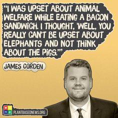 Wise words from newly 'meat free' James Corden. A Softer World, Reasons To Be Vegan, Vegan Looks, Why Vegan, Vegan Vegetarian, Vegan Facts, Animal Activist, Vegan Quotes, Vegan Humor