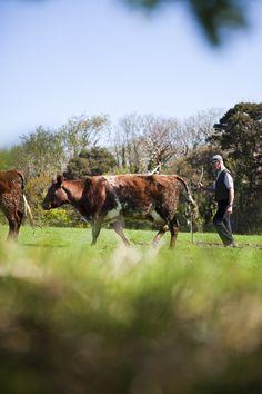 Muckross Traditional Farms TV_39