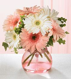 Compassionate Callings Gerbera Bouquet: A mix of white & pink Gerbera daisies are lovingly accented with variegated ivy and green hypericum berries.