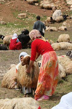 Milking the Flock in Box Canyon outside of Mardin, Turkey