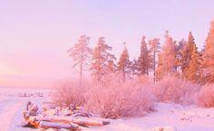 Pink sunset light over snowy forest HD Wallpaper
