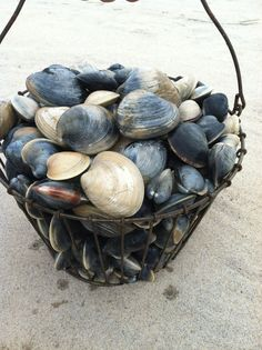 Basket of clams